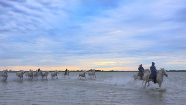 "Gardians have played a vital role in Camargue culture for generations, but their way of life is becoming harder and harder to sustain. (Video still from ""Les Gardians: Stewards of the Camargue"" by Bob Krist)"